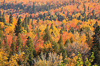 """""""Fall Splendor""""<br /> <br /> Lake Superior's North Shore is bursting with color each Fall."""