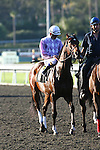 15 February 2010: Raging Wit in the San Vicente Stakes(GII) at Santa Anita Park in Arcadia, CA..