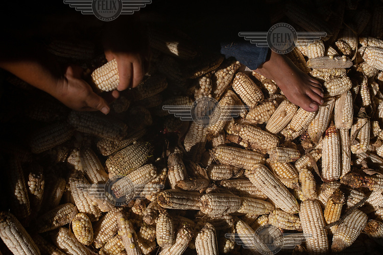 War survivor Juana Lorenzo, 45, selects and cleans ears of corn recently harvested in the 15 de Octubre La Trinidad community. Her family are war survivors from Huehuetenango who have lived the community's plight as refugees in Mexico, returnees, and now victims of Fuego Volcano. She states: ''I came back in March because of the coronavirus. Over there, in the ATUs, we were so crammed, and since this is so contagious, well you can imagine. We were sharing bathrooms and the kitchen is so far from our unit. It is really hard being over there, I felt as if I was being punished and we didn't have anywhere to grow food. And with this virus, well we had no choice but to come back despite the volcano. Yes, I am scared. Very scared. I get really nervous. But we don't have any income and over there we must buy everything to eat. Us campesinos like to work the land, it feeds us. From here we will continue to fight for our right to have a community landholding.''