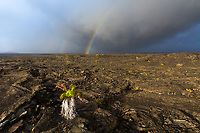Amazing double rainbow above black lava with fern growing through it, under a dark, stormy sky, in Hawaii Volcanoes National Park, Big Island, Hawaii