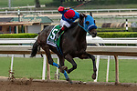 """ARCADIA, CA  SEPTEMBER 28:  <br /> #5 Mongolian Groom, ridden by Abel Cedillo, in the stretch of the Awesome Again Stakes (Grade l) """"Win and You're Breeders' Cup Classic Division"""" on September 28, 2019 at Santa Anita Park in Arcadia, CA.(Photo by Casey Phillips/Eclipse Sportswire/CSM)"""