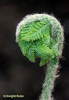 FE09-008d  Fern - opening, sporophyte