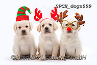 Christmas - animals  photos