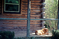 Mixed breed dog finds a peice of sunshine on the front porch out in the country, Missouri USA