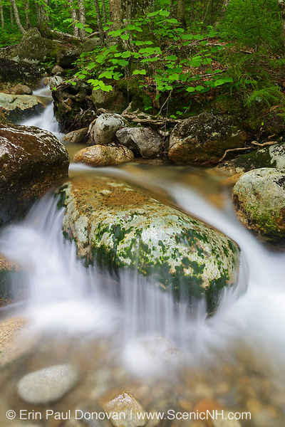 Lafayette Brook Scenic Area - Lafayette Brook in Franconia, New Hampshire USA during the spring months.