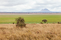 Tanzania. Tarangire National Park.  Dry season grass in foreground,  Silale Swamp in Background.