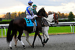 31 October 2009: Blame (no 9), ridden by Jamie Theriot, and trained by Albert M. Stall Jr. is led to the post for the 51st running of the $150,000 Fayette Grade II stakes race.