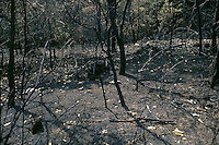 Danni dopo un incendio.Damage after a fire.....