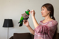 Ms. Yang, 27, places a hat on her pet Eclectus parrot. Quitting her day job in the media industry, she started a company making and selling costumes for parrots. She sells the outfits online to a growing market of pet owners. The Ecletus parrot is originally found in countries including Australia, the Solomon Islands and New Guinea. Recent new laws in China have made it increasingly difficult for people to own birds as pets. Many species, including parrots, are now deemed illegal.