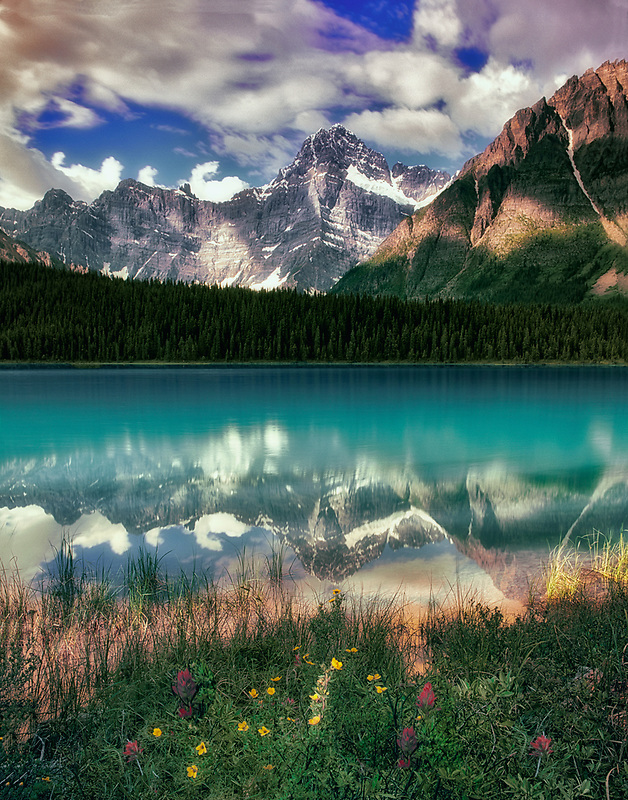 Reflection in Waterfowl Lake with wildflowers and Waputik Mountains. Banff National Park, Canada
