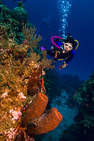 9 June 2015: SCUBA Diver Sally Herschorn explores the reef at Hepps Wall, on the North Shore of Grand Cayman Island. Located in the British West Indies in the Caribbean, the Cayman Islands are renowned for excellent scuba diving, snorkeling, beaches and banking.  Mandatory Credit: Ed Wolfstein Photo *** RAW (NEF) Image File Available ***