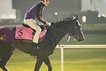 DUBAI,UNITED ARAB EMIRATES-MARCH 30: Ruggerro,trained by Yuichi Shikato,exercises in preparation for the UAE Derby at Meydan Racecourse on March 30,2018 in Dubai,United Arab Emirates (Photo by Kaz Ishida/Eclipse Sportswire/Getty Images)