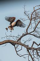 Okavango Delta_birds