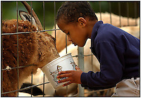 Children feed animals during a class trip to the Lazy Five Ranch in Mooresville, NC. Lazy 5 Ranch is a privately owned exotic animal drive through park and safari in Iredell County, NC.