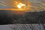 Glistening Ice Covered Branches in the Setting Sun on a Hilltop Pasture in Wintry New Hampshire