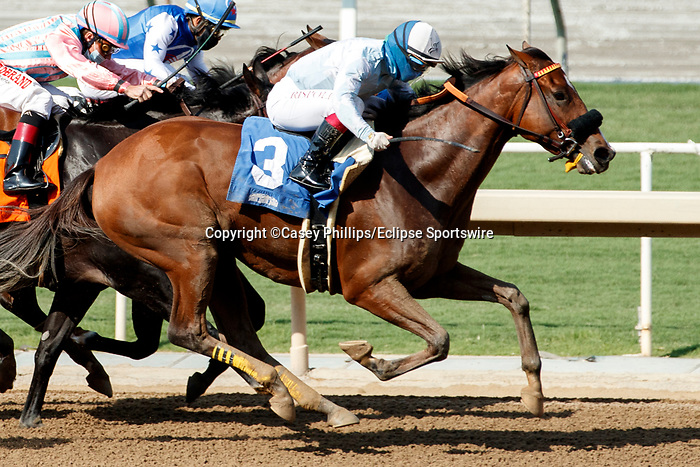 ARCADIA, CA  SEP 25: #3 Into Chocolate, ridden by Umberto Rispoli, in the stretch of the Chillingworth Stakes (Grade lll) on September 25, 2020 at Santa Anita Park in Arcadia, CA.  (Photo by Casey Phillips/Eclipse Sportswire/CSM.