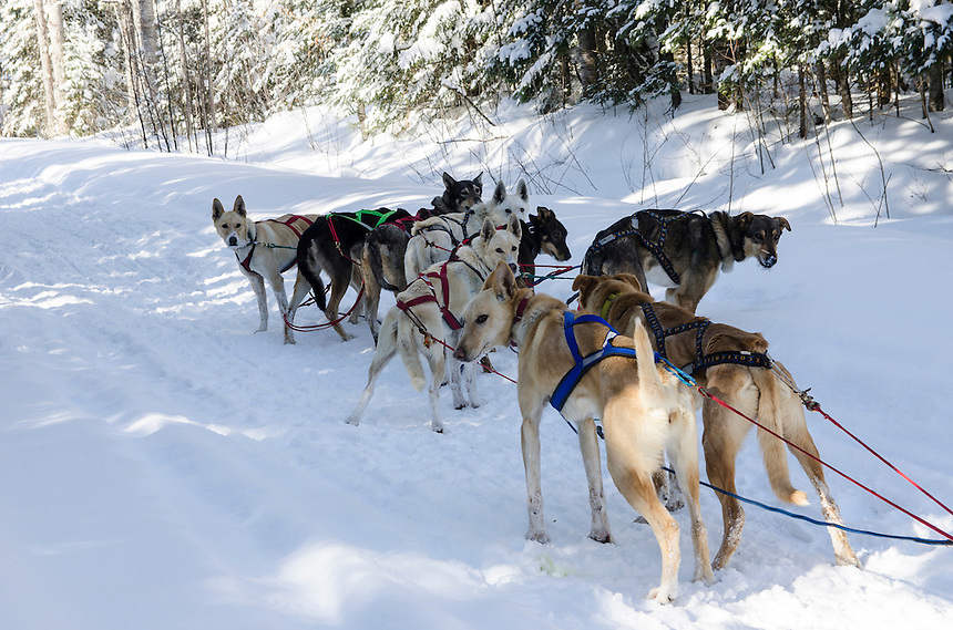 A capture from the 2014 UP200 dog sled race that runs from Marquette, MI to Grand Marais, MI and back.