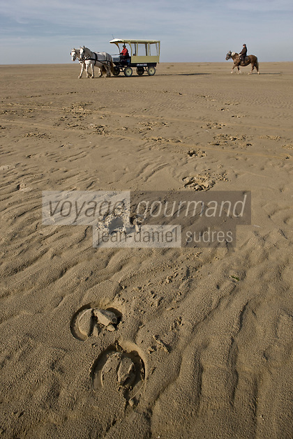Europe/France/Picardie/80/Somme/Baie de Somme/Saint-Quentin-en-Tourmont : Parc du Marquenterre