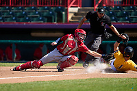 Harrisburg Senators catcher Brady Lindsly (34) attempts to tag Andrew Navigato (1) sliding home safely during a game against the Erie Seawolves on September 5, 2021 at UPMC Park in Erie, Pennsylvania.  Umpire Gabriel Alfonzo gets in position to make the call.  (Mike Janes/Four Seam Images)