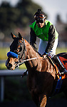 Streaming ridden by Martin Garcia wins the Hollywood Starlet Stakes on December 07, 2013 at Betfair Hollywood Park in Inglewood, California .(Alex Evers/ Eclipse Sportswire)
