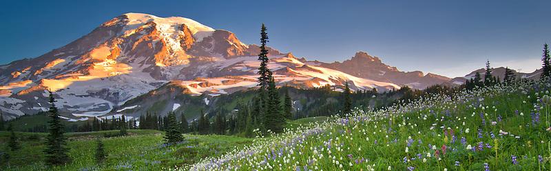 Wildflowers and Mt. Rainie. Mt. Rainier National Park, Washington
