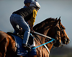 October 27, 2019 : Scenes From Around The Track at Santa Anita Park in Arcadia, California on October 27, 2019. Carolyn Simancik/Eclipse Sportswire/Breeders' Cup/CSM
