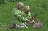 Kinder füttern zahmes Reh, Rehwild, Capreolus capreolus, Portrait Weibchen, Ricke, roe deer