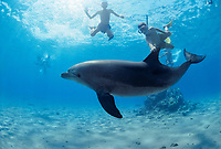 Children Swimming with Bottlenose Dolphin, Tursiops truncatus, Nuweiba, Egypt, Red Sea., Northern Africa