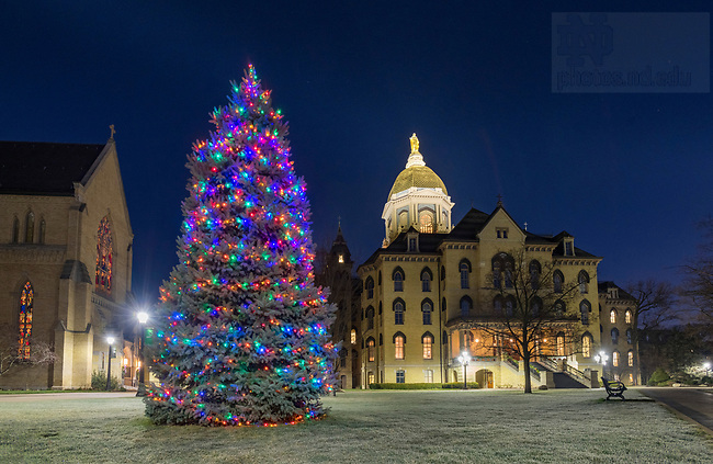 December 10, 2020; Christmas tree on the Main Quad.  (Photo by Barbara Johnston/University of Notre Dame)