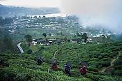 Workers pick tea leaves at the Pedro Tea Estate in Nuwareliya in Central Sri Lanka.  Photo: Sanjit Das/Panos