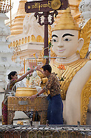 Myanmar, Burma.  Shwedagon Pagoda, Yangon, Rangoon.  Worshipers pour water, a sign of purification, over small Buddha.