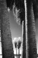 Twin palm trees<br />