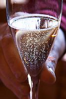 A glass of sparkling RPF Reserva Personal de la Familia Brut Nature 2004 Blanc de Blanc in the hand of one of the Pisano brothers. Bodega Pisano Winery, Progreso, Uruguay, South America