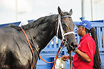 Toronto, ON - September  17:   Tepin in the winner's circle  at the Ricoh Woodbine Mile Stakes  at Woodbine Race Course on September 17, 2016 in Toronto, Ontario. (Photo by Sophia Shore/Eclipse Sportswire/Getty Images)