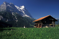 Switzerland, Grindelwald, Bern, Bernese Alps, Europe, Scenic view of a small wooden chalet against the snow-capped mountains of the Bernese Alps in Grindelwald.