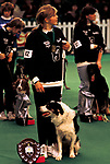 'CRUFTS', BISLEY WITH OWNER LAURA PHEBY, 13 YEARS OLD., 1991