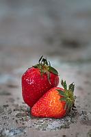 Gastronomie générale / Fraise Mariguette //  General gastronomy / Mariguette strawberry