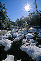 Snow covered Hummocks, winter stream.  Pine Barrens, New Jersey