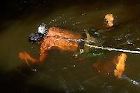 Damilton Rodrigues da Costa 29 anos casado duas filhas, trabalha com pesca de peixes ornamentais desde os 16 anos  e seu aprendiz Edson da Costa Gomes de 15 anos se preparam com equipamentos prec¬∑rios para mergulhar nas ¬∑guas do rio XingÀ? para capturar centenas de peixes ornamentais e vend√ç-los para empresas exportadoras que trabalham com os mercados da ¬°sia, China e Europa e chegam a mandar para fora do pa√?s mais de 200.000 mil esp√?cimes por m√çs.Altamira, Par¬∑, Brasil.10/02/2006Foto Paulo Santos/Interfoto