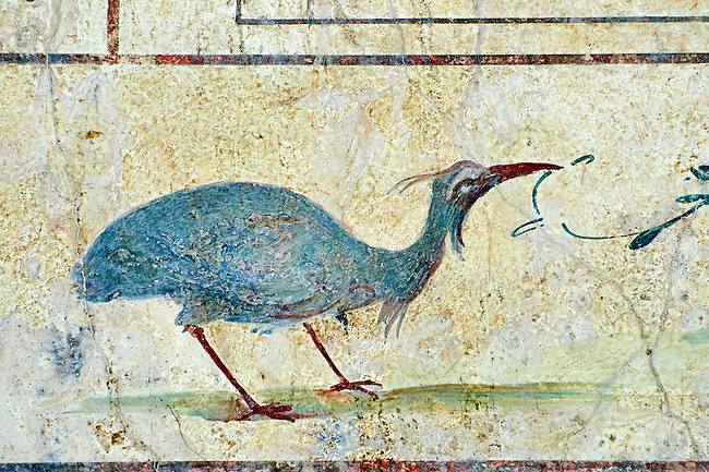 Roman Fresco of an exotic bird from The Large Columbarium in Villa Doria Panphilj, Rome. A columbarium is usually a type of tomb with walls lined by niches that hold urns containing the ashes of the dead.  Large columbaria were built in Rome between the end of the Republican Era and the Flavio Principality (second half of the first century AD).  Museo Nazionale Romano ( National Roman Museum), Rome, Italy.