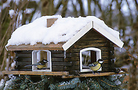 Kohlmeise, Vogelfütterung, Fütterung, Vogelfutterhäuschen, Vogelfutterhaus, Futterhäuschen, Futterhaus, Winterfütterung, Vogelhäuschen,  Kohl-Meise, Meise, Parus major, great tit