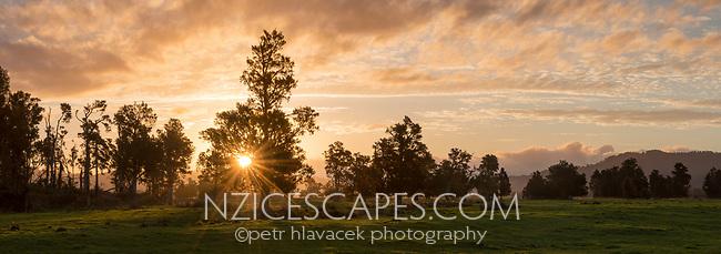 Farmland in South Westland with totara trees at sunset, West Coast, New Zealand, NZ