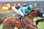 February 27, 2021: Spielberg #7 ridden by Martin Garcia during the running of the Southwest Stakes (Grade 3), a 'Road to the Kentucky Derby' points race, for trainer Brad Cox at Oaklawn Park in Hot Springs, Arkansas. Ted McClenning/Eclipse Sportswire/CSM