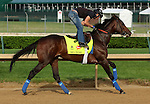 LOUISVILLE, KY - APRIL 25: Mo Tom (Uncle Mo x Caroni, by Rubiano) gallops on the track at Churchill Downs, Louisville KY in preparation for the Kentucky Derby. Owner G M B Racing, trainer Thomas A. Amoss. (Photo by Mary M. Meek/Eclipse Sportswire/Getty Images)