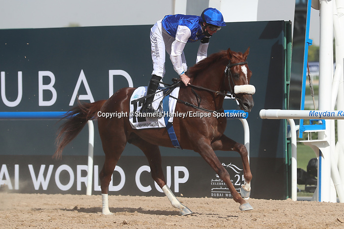 March 27, 2021: RB FRYNCHH DUDE #12 in the post parade for the Kahayla Classic on Dubai World Cup Day, Meydan Racecourse, Dubai, UAE. Shamela Hanley/Eclipse Sportswire/CSM