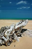 Driftwood on Flinder's Beach, Mapoon, Cape York Peninsula