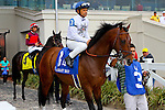 February 21, 2015:Majestic Harbor with Mike E Smith up in the Mineshaft Handicap at the New Orleans Fairgrounds Risen Star Stakes Day. Steve Dalmado/ESW/CSM
