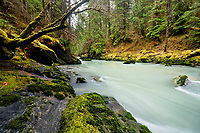 Boulder River flowing through old growth forest, Boulder River Wilderness, Central Cascades, Washington, USA
