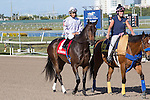 February 21, 2015: Lassofthemohicans on post parade before the start of the Davona Dale Stakes(G2). Gulfstream Park, Hallandale Beach (FL). Arron Haggart/ESW/CSM