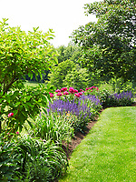 An herbaceous border in the garden with purple salvia and pink peonies; the neatly edged lawn sets off the weed-free flower beds.